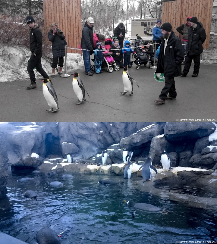 calgary_zoo_penguins